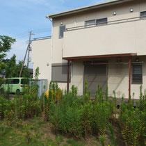着工前、広い敷地全面に敷かれた芝生は、手の付けられないくらい雑草に覆われてしまいました。
