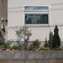 大きな腰窓の下には成長が楽しみなオリーブとコニファーを取り入れたカラーリーフガーデン。