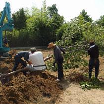 舗装計画地に植わっている高さ7mクラスの桜を、丁寧に根巻きしながら移植します。