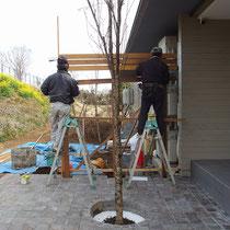 玄関横のウッドフェンスは、奥のバックヤードを隠す要素として機能します。