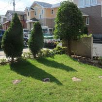 駐車場側、綺麗に高麗芝が貼られて管理されていました。