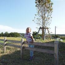 岡の上にたつ大きなキンモクセイ。僕もぐんぐん大きくなるよ。