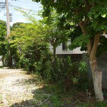 作業前は大木になった植栽で通路を圧迫するほどです。