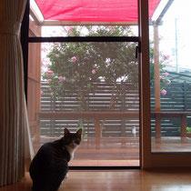 お部屋からの眺めもよく、のんびり寛げるにゃ。ねむのきでは人気の赤いサンシェード付。