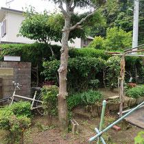 施工前、目隠し要素としては申し分ないカイズカイブキの生垣、風通しが悪くお庭も暗くなりがちです。