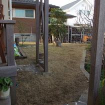 張芝後6ヵ月経った12月。TM9もコウライ芝も枯れる季節、雑草の成長もとまり一番安泰です。