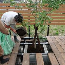 ご主人が作成しているデッキの一部にブロック積花壇を配置。シマトネリコを植えました。