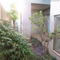 施工前、手入れが行き届かない中庭は植物がうっそうとしており、待合室からも心地よい景色を楽しめる状態ではなかったです。