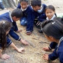 Biologieunterricht im Park. Foto: Cisol, 2014