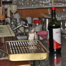 Corfu 2015, Dort wo der Wirt Tassos das Bier zapft, landet eine Schwalbe