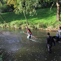 Fischbestandsaufnahme in einem Bach