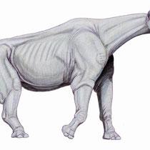 Paracetarios (Paraceratherium)