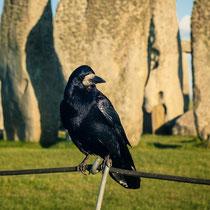 Чёрный ворон Стоунхенджа, Великобритания. Вера Ужва, Россия, Москва/Дубна