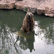 Медведь. Ольга Гайсински. Бат-Ям. Израиль