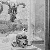 Зоологический музей. г. Санкт-Петербург. Ирина Протосеня (ironrations), Россия