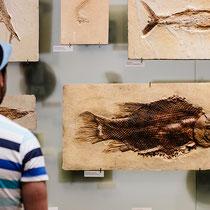 Берлинский палеонтологический музей, не моряк и не рыба   Ирина Протосеня (ironrations), Россия
