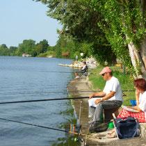 lot vissen