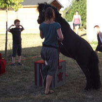 lot et bastides pony show
