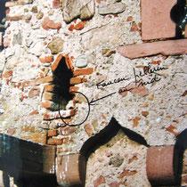 Le nid de faucons pélerins à la Tour des Voleurs de Ammerschwihr,