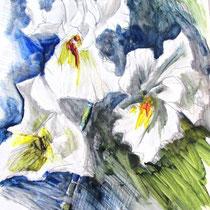 * 455- Iris, acrylique sur papier glacé, 40 x 50