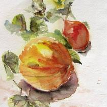 * 466- Légumes,!