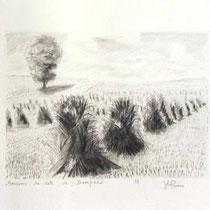 1119-  Blé en gerbes près de Dompaire, 20 x 30, au crayon de papier;