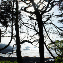 wild pacific trail - ucluelet - vancouver island