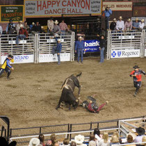 bullriding in pendleton / oregon
