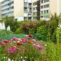 Le jardin aux pieds des HLM