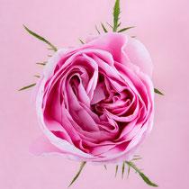 Rose, Königin von Dänemark