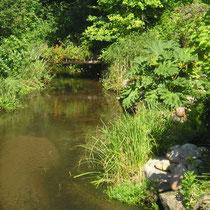 Die Neetze (Fluss der auch vor dem Haus entlang fließt)