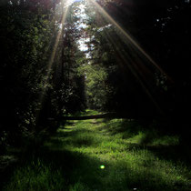Wald in der Umgebung