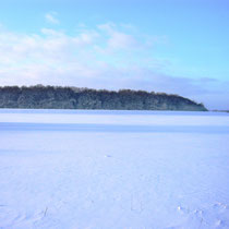 Elbtalaue im Winter