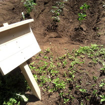 家庭菜園の記念に。新しくできた畑に立てる、看板のご依頼です。自作テーブルソーでの初仕事となりました。