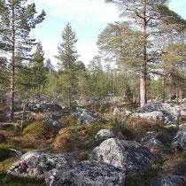 Au Nord de la Finlande, près de Neiden