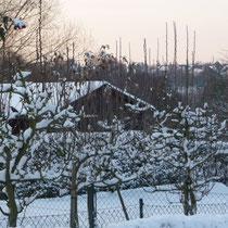 Kleingarten Brühl im Schnee