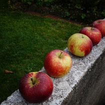 "Äpfel der Sorte ""roter Berlepsch"""