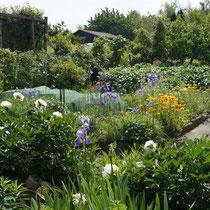 Schrebergarten juni 2014-Blumen und Gemüse