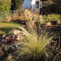 Gartenansicht Februar mit Federgras