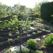Kleingarten Brühl mit Gemüsebeet und blühenden Bäumen Mai 2013