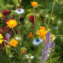 Blumenbeet mit Ringelblumen, Jungfer im Grünen und Indianernessel