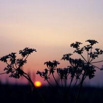 Morgenerwachen © Verena N._pixelio.de