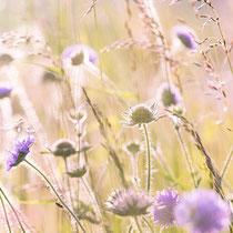 Wildblumen © LUM3N_pixabay.de