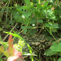 biodiversität gründüngung bodenleben wildkräuter knöllchenbakterien mischkultur lebensraum insekten kröte frosch