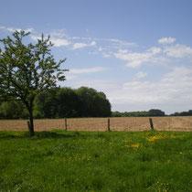 Une prairie permet de favoriser l'infiltration des eaux ruisselées et sédimenter les fines contenues dans les eaux de ruissellements