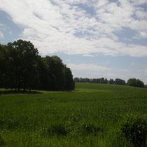 L'implantation d'herbe dans les axes d'écoulement de l'eau permet de limiter les phénomènes d'érosion du thalweg