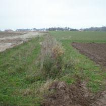 Fascine 7 mois après implantation, après l'orage du 18 Novembre 2010 La fascine a joué son rôle, les limons ralentis se sont déposés en amont, la ravine en aval a été évitée.