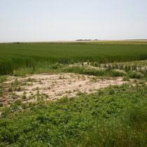 Cône de sédimentation en amont de la même haie, 6 mois après plantation, Longueil, BV Saâne