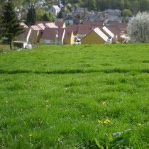 Il est primordial  de  maintenir en place cette parcelle enherbée à l'amont d'une zone urbaine. Elle est le seul tampon entre les ruissellements d'origine agricole et les zones habitées.