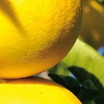 Bergamotte Kalabrien´s Zitrusfrucht